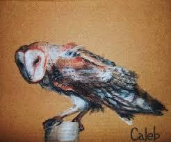 North American Barn Owl North American Barn Owl By Explodingheads On Deviantart