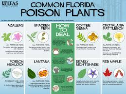 Florida Landscape Ideas by It U0027s Always Good To Know Which Plants In Your Florida Landscape