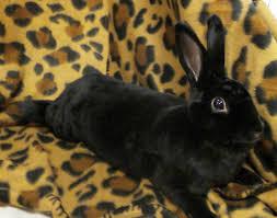 other pets animal health foundation blog