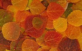 halloween background leaves fall candy autumn halloween background wallpapers download wallpaper