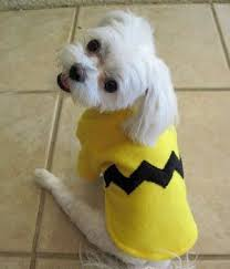 Funny Halloween Costumes Dogs 25 Pet Costumes Ideas Pet Halloween Costumes