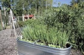 farm show horse trough garden features unique watering system