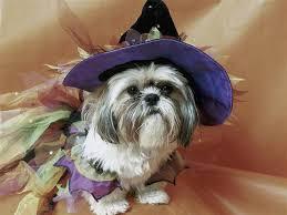Baby Animal Halloween Costumes 83 Dog Halloween Costumes Images Animals