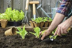 urban homesteading tips for a self sufficient lifestyle the