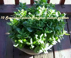 ten succulent plants for your indoor garden my wahm plan