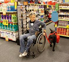 How Does A Guide Dog Help A Blind Person Neads Rights Access U0026 Laws