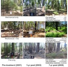 Trees And Their Meanings The Effects Of Density And High Severity Fire On Tree And Forest