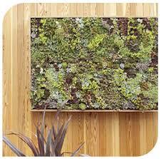 Wall Garden Planter by Bright Green U0027s Grovert Living Wall Garden Things I Like
