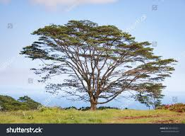 majestic tree stock photo 596159351