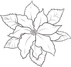 how to make poinsettia flower sketch coloring page download