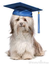 dog graduation cap and gown dog graduation costume costume model ideas