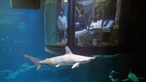 chambre aquarium passer une nuit au milieu des requins ça vous tente