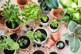 Best Indoor House Plants Best Indoor Plants Guaranteed To Improve Air Quality At Home