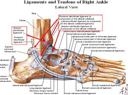 Anterior Tibiofibular Ligament Injury Image Lateral Ankle For Term Side Of Card Foot U0026 Ankle