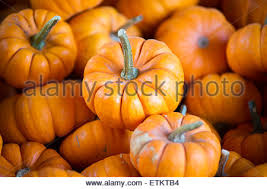 Small Pumpkins Small Pumpkins For Sale Stock Photo Royalty Free Image 2087196
