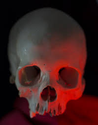 How Many Bones Form The Cranium 5 Weird Facts About The Human Skull And 5 High Res Images