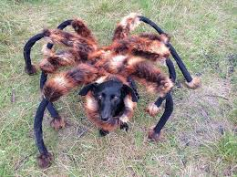 Halloween Costume Ideas For Pets 20 Spooky Dog Halloween Costume Ideas Cute Overload Babamail