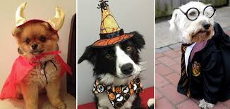 dog halloween costumes that are safe trupanion