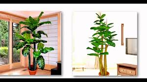 office decoration flowers and plants in singapore youtube