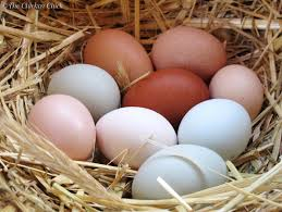 low egg production in poultry causes and solutions green