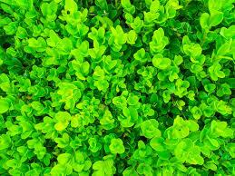 green plants green plants