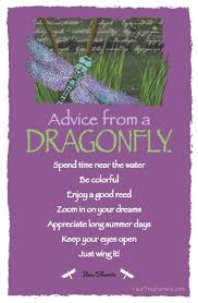 advice from a dragonfly witches of the craft witchy