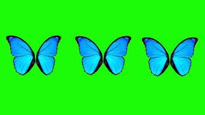 butterfly wings green screen animation youtube
