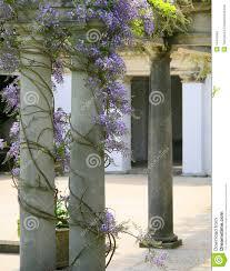 wisteria climbing pillars stock photo image 14441840