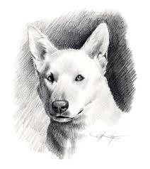 white german shepherd dog pencil drawing art print signed by