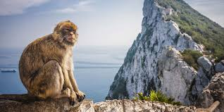 Show Gibraltar On World Map by Cruises In Europe Discover The Atlantic Coast Hurtigruten