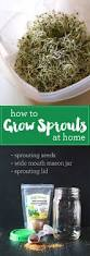 best 25 growing sprouts ideas on pinterest how to grow sprouts