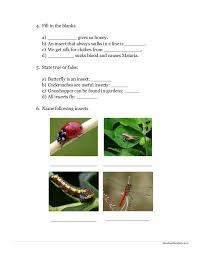evs worksheets for grade 1 icse math worksheet maths addition