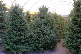 ergle christmas tree farm in dade city florida saunders real estate