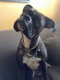 boxer dog vine 88 best funny dog videos images on pinterest funny dog videos