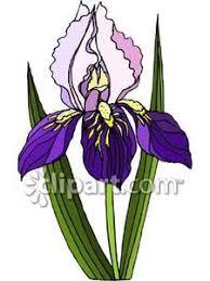 iris flower garden clipart