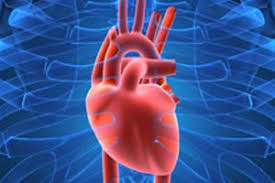 A Picture Of The Human Anatomy Heart Anatomy Function U0026 Facts