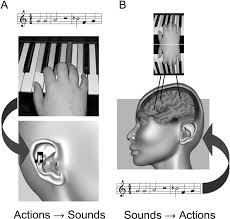action representation of sound audiomotor recognition network