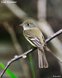 Florida birds images 159 best florida birds images florida beautiful jpg