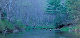 Washington forest images George washington national forest southern environmental law center jpg