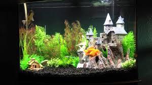 harry potter inspired goldfish aquarium