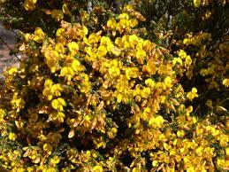 best australian native plants 5 plants to brighten your garden good living