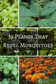 13 plants that repel flies