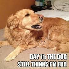Dog And Cat Memes - 25 most adorable dogs with cats memes