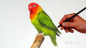 simple love birds drawings drawing a love bird with simple colored