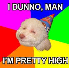 Birthday Dog Meme - high birthday dog birthday dog meme memetripper