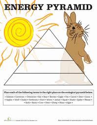 energy pyramid worksheet education com