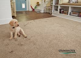 coles flooring carpets stainmaster active family