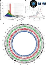 Dna Mapping Maternal Plasma Dna Sequencing Reveals The Genome Wide Genetic And