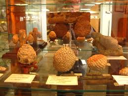 petrified wood gallery ogallala all you need to before