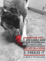 why your dog needs a kong stale cheerios